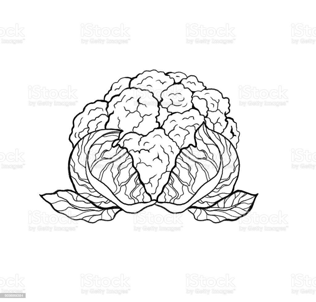 El Taze Karnabahar Lahana Salatası çekilmiş Anahat Beyaz Arka Plan