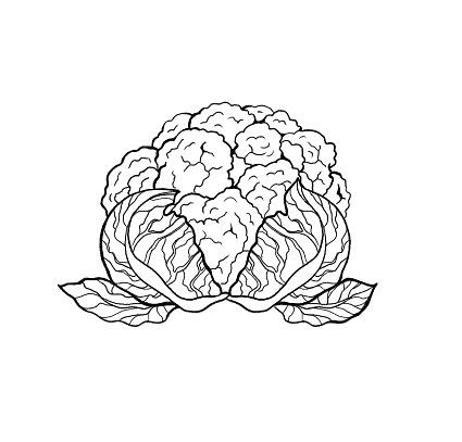 El Taze Karnabahar Lahana Salatasi Cekilmis Anahat Beyaz Arka Plan