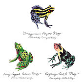 Hand Drawn Frog Set