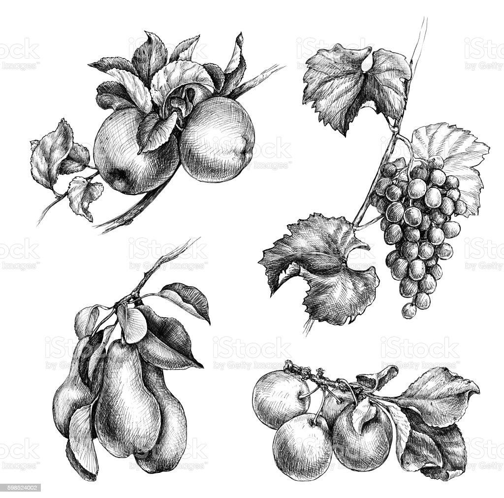 Hand drawn fruit set vector art illustration