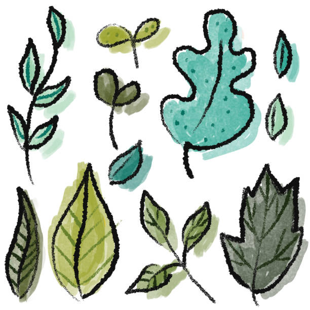 Hand drawn group of leaves Group of leaves on white background drawing kathrynsk stock illustrations