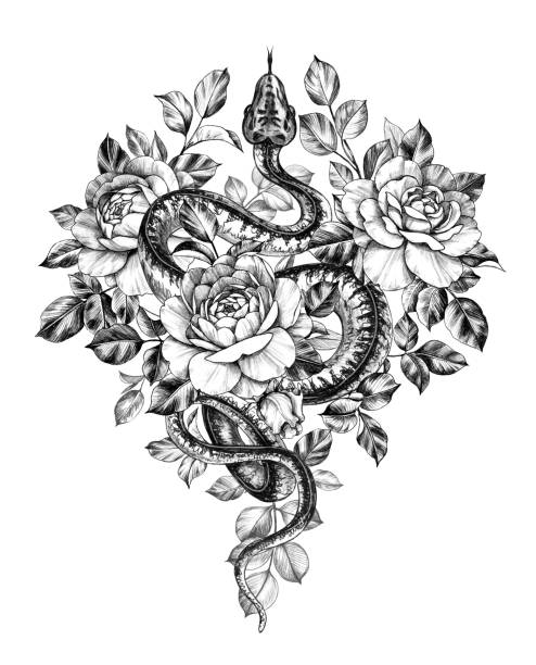 Hand Drawn Monochrome Creeping Python wth Roses Hand drawn creeping Garden Tree Boa decorated roses isolated on white background. Pencil drawing monochrome Python snake with flowers. Floral illustration in vintage style, t-shirt design, tattoo art. snakes tattoos stock illustrations