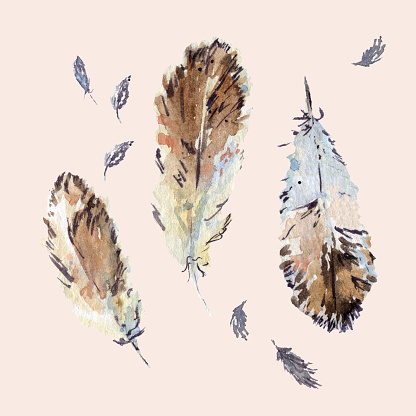 Hand drawn soft pastel feathers