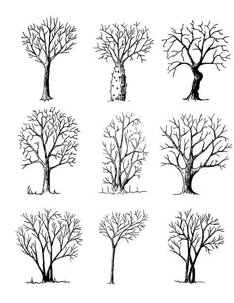 поэтому теряет рисунок дерева интерпретация фото усадьбе коломенское это