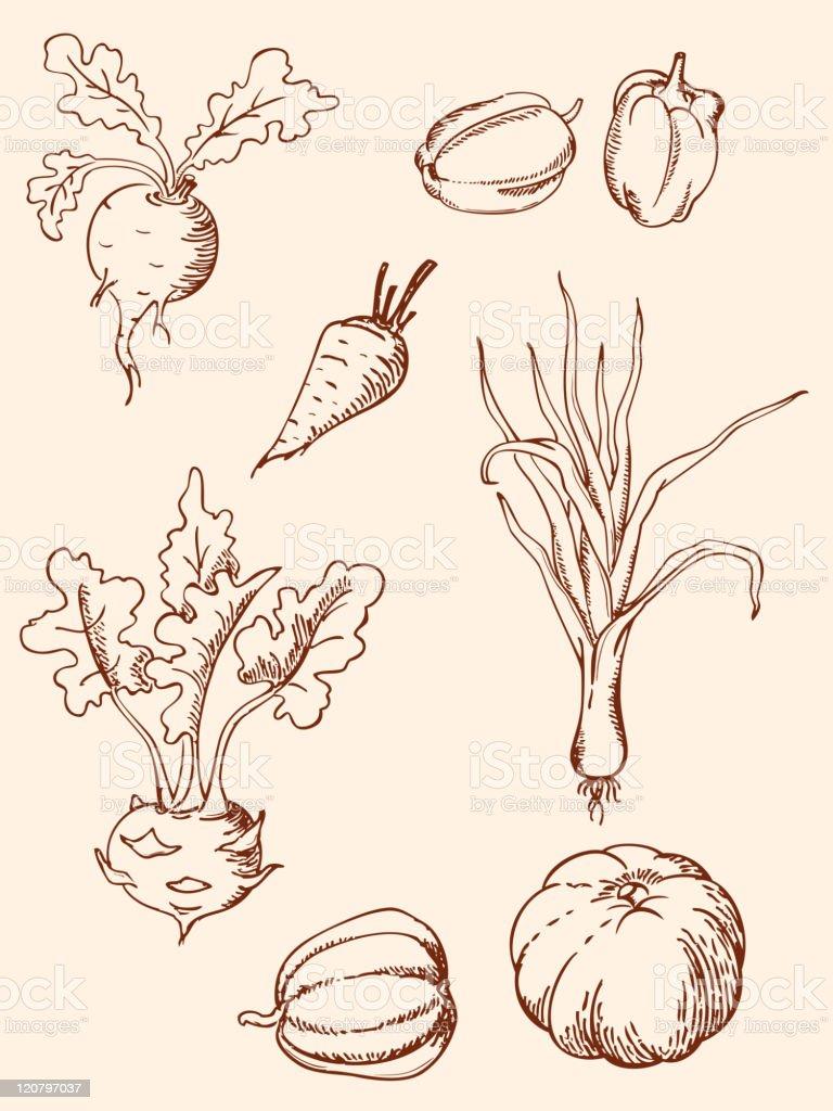 hand drawn vintage vegetables vector art illustration