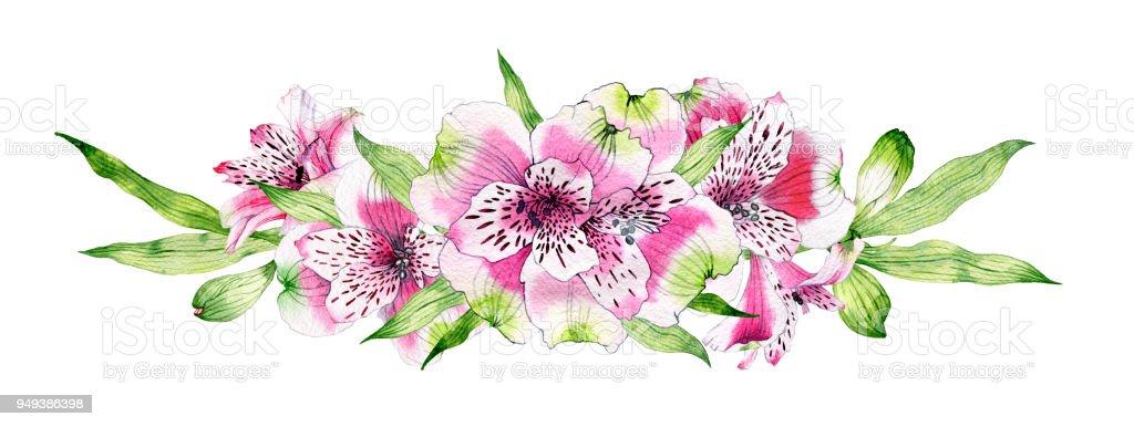 Mano dibujada acuarela flor de Alstroemeria - ilustración de arte vectorial