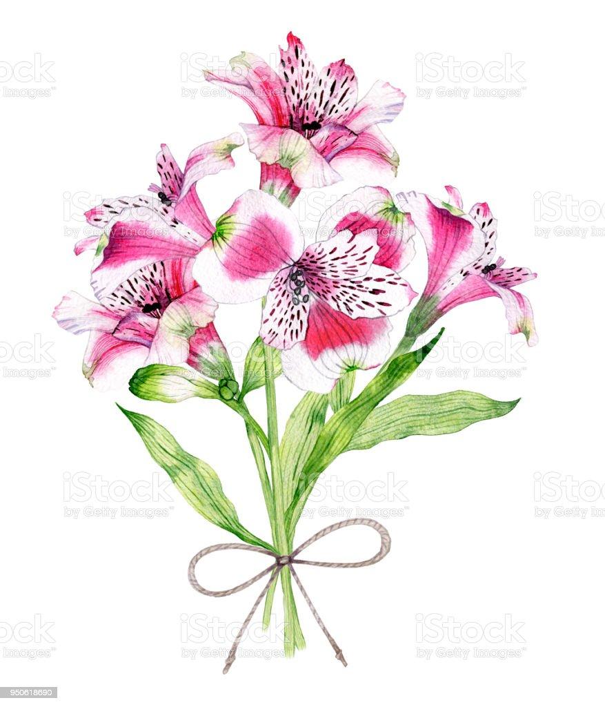 mano dibuja acuarela ramo de flores de Alstroemeria - ilustración de arte vectorial