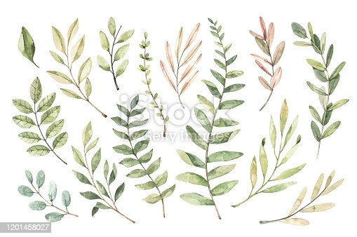 istock Hand drawn watercolor illustration. Botanical clipart with branches and leaves. Greenery. Floral Design elements. Perfect for wedding invitations, cards, prints, posters, packing 1201458027