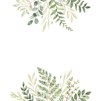 Hand drawn watercolor illustration. Botanical frame with eucalyptus, branches, fern and leaves. Greenery. Floral Design elements. Perfect for wedding invitations, cards, prints, posters, packing