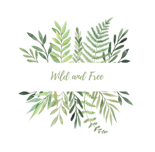 hand drawn watercolor illustration. botanical label with green leaves, branches and herbs. floral design elements. perfect for wedding invitations, greeting cards, prints, posters, packing etc - wildflowers stock illustrations, clip art, cartoons, & icons