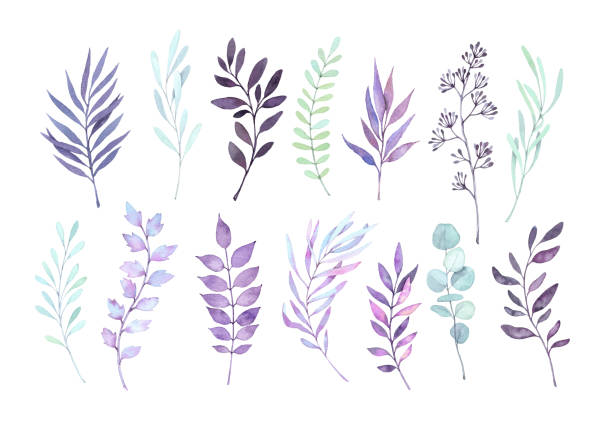 Hand drawn watercolor illustrations. Autumn Botanical clipart. Set of purple leaves, herbs and branches. Floral Design elements. Perfect for wedding invitations, greeting cards, posters, prints Hand drawn watercolor illustrations. Autumn Botanical clipart. Set of purple leaves, herbs and branches. Floral Design elements. Perfect for wedding invitations, greeting cards, posters, prints violet flower stock illustrations