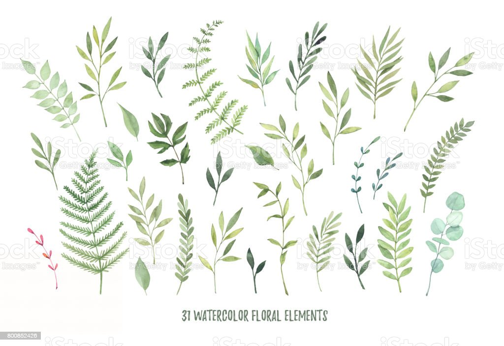 Hand drawn watercolor illustrations. Botanical clipart ( laurels, frames, leaves, flowers, swirls, herbs, branches). Floral Design elements. Perfect for wedding invitations, greeting cards, blogs, posters and more vector art illustration