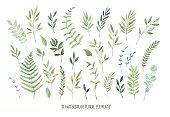 手描き水彩イラスト。植物アート (月桂樹、フレーム、葉、花、まんじ、ハーブ、枝)。花のデザイン要素です。結婚式の招待状やグリーティング カード、ブログ、ポスターなどに最適