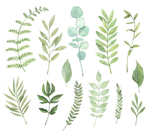 Hand drawn watercolor illustrations. Botanical clipart. Set of Green leaves, herbs and branches. Floral Design elements. Perfect for wedding invitations, greeting cards, blogs, posters and more vector art illustration
