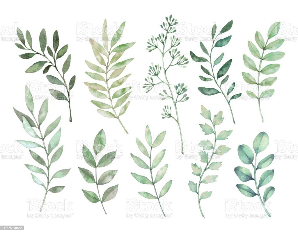 手描き水彩イラスト植物アート緑の葉ハーブ枝のセットです花のデザイン
