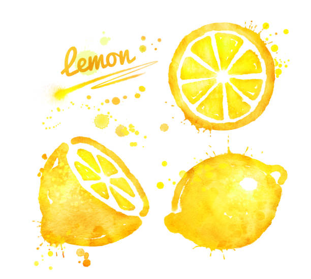 手描き水彩のレモンです。 ベクターアートイラスト