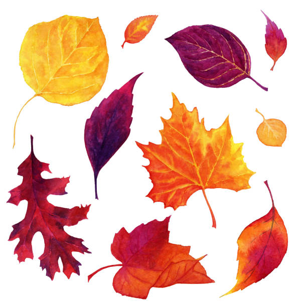 Hand drawn watercolor pattern with autumn leaves isolated on white background Hand made illustration in watercolors. Watercolor painting with bright yellow, orange, red, purple, violet autumn leaves isolated on white background. autumn drawings stock illustrations