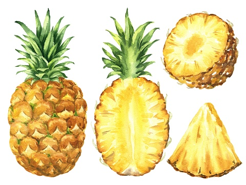 Hand drawn watercolor pineapple set isolated on white background. Food illustration.