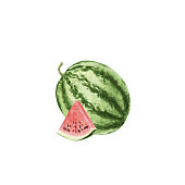 hand drawn watercolor watermelon isolated
