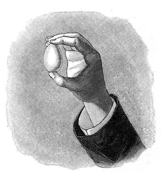 Hand holding egg Illustration of a hand holding egg female animal stock illustrations