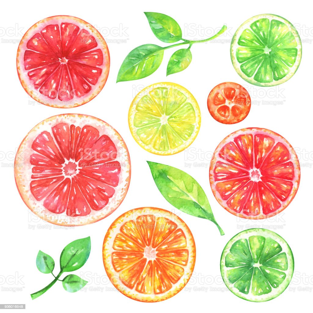 Hand painted citrus fruits set vector art illustration