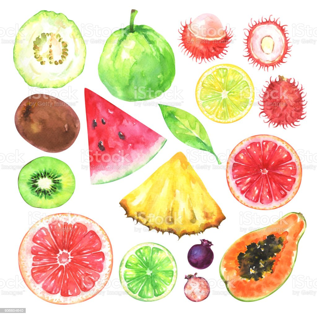 Hand painted exotic fruits set vector art illustration