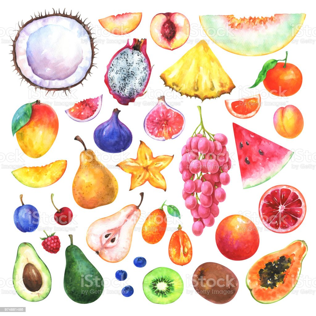 Hand painted fruits set vector art illustration