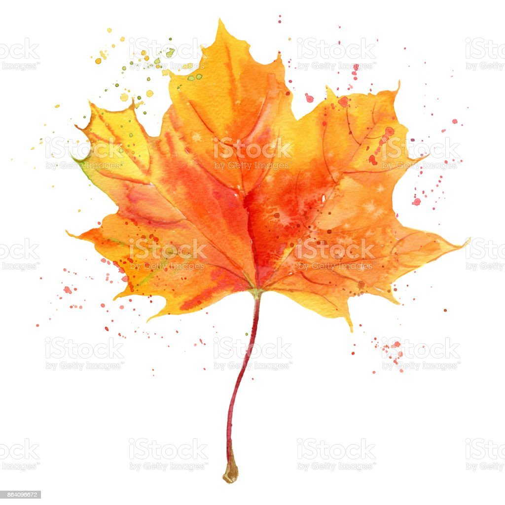Hand painted watercolor autumn maple leaf. Botanical Illustration isolated on white background royalty-free hand painted watercolor autumn maple leaf botanical illustration isolated on white background stock vector art & more images of art