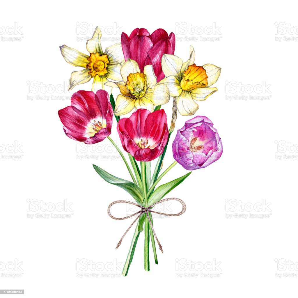 Hand Painted Watercolor Bouquet Of Spring Flowers Stock Vector Art