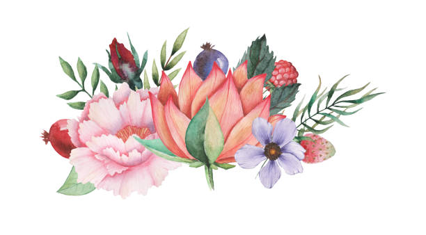 Hand painted watercolor charming combination of Flowers and Leaves isolated on white background Hand painted watercolor charming combination of Flowers and Leaves, isolated on white background pacific dogwood stock illustrations