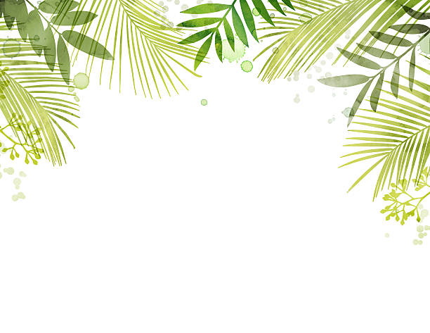 Royalty Free Palm Leaf Clip Art, Vector Images ...
