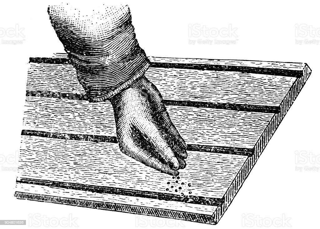 Semillas De Coser De Mano Illustracion Libre de Derechos 904801636 ...