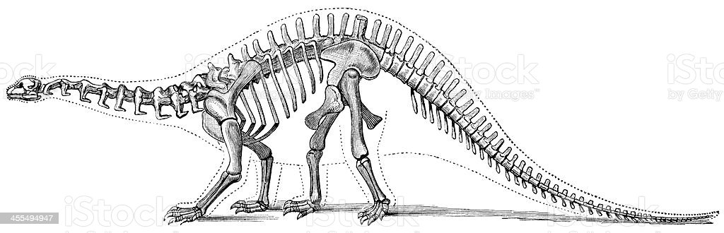 Hand-drawn illustration of a brontosaurus skeleton vector art illustration