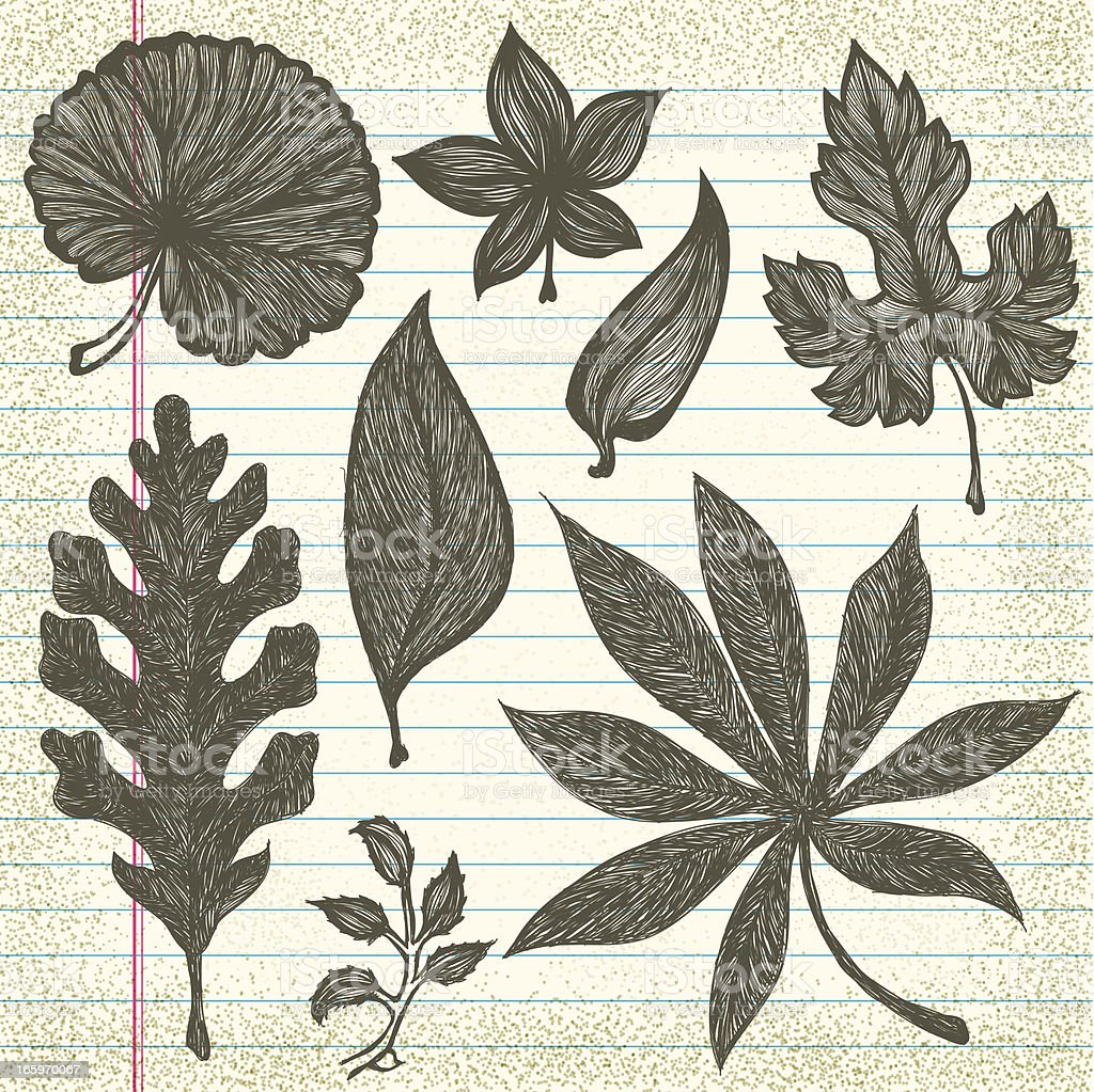 Hand-Drawn Leaves on Old Paper royalty-free stock vector art