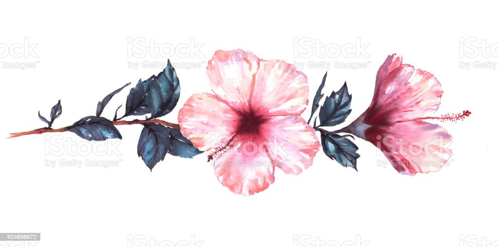 Handgezeichnete Aquarell Blumen Außenillustration Zart Weiß Mit Rosa ...