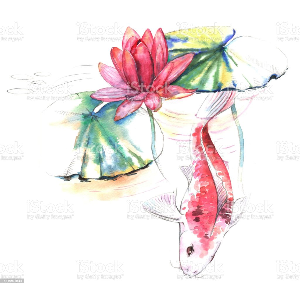 0e76f05a29af8 Hand-drawn watercolor illustration of the Koi carp fish in the water with  lotus pink