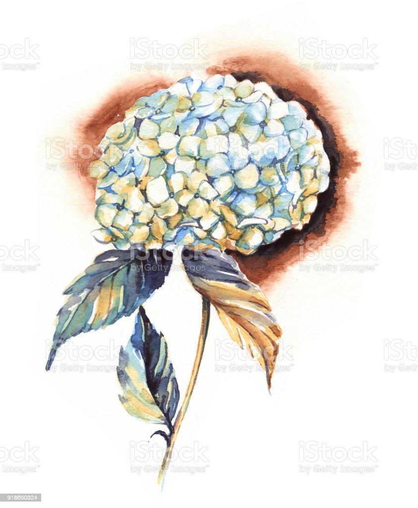 Fleur Dhortensia Blanc Aquarelle Dessinees A La Main De Dessin