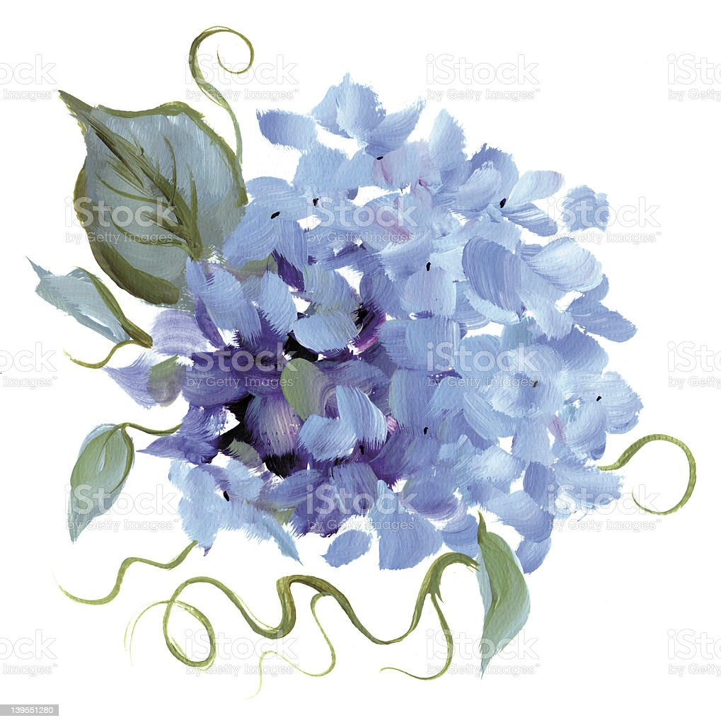 Hand-painted Hydrangea - RASTER illustration vector art illustration