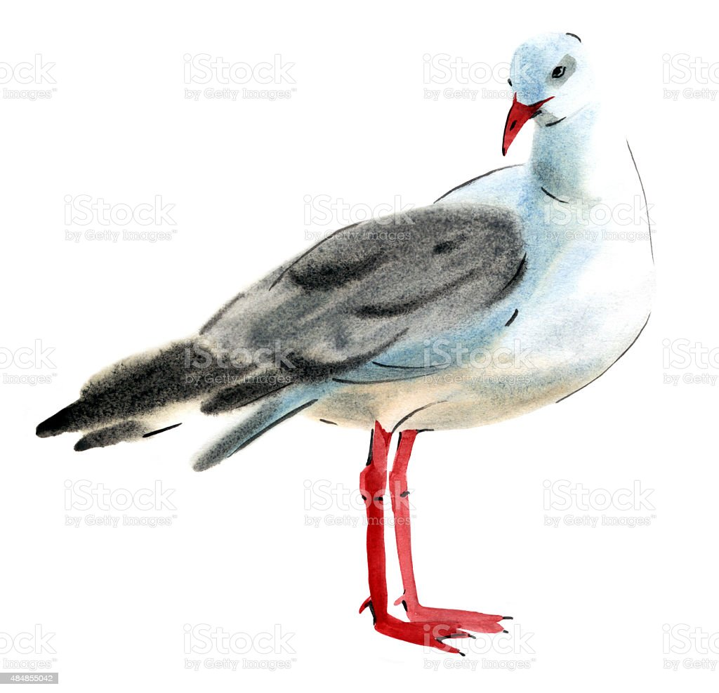 Handwork watercolor illustration of a bird Seagull in white background. vector art illustration