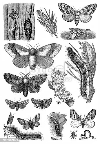 Illustration of a harmful forest insects
