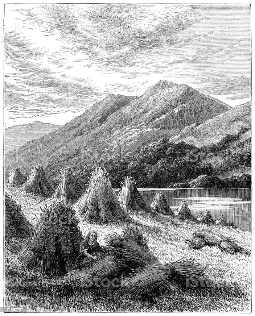 Harvest in The Highlands (Victorian engraving) royalty-free harvest in the highlands stock vector art & more images of 1880-1889