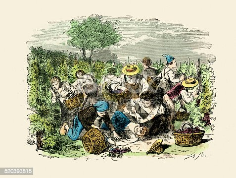 Vintage engraving of a agricultural workers harvesting the wine grapes in France, 1875