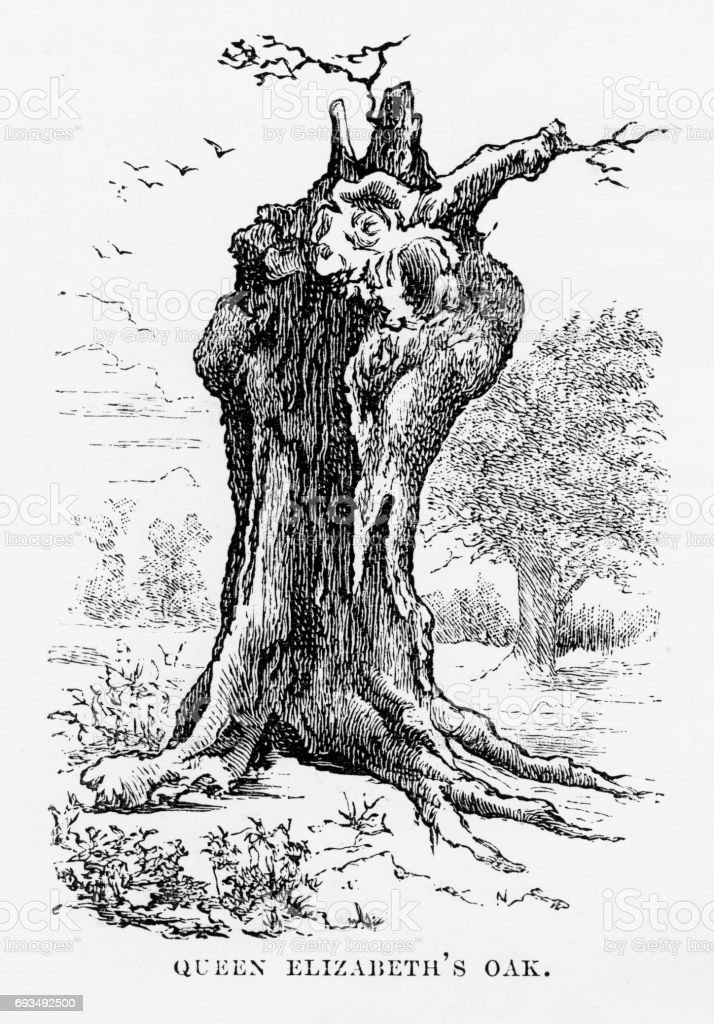 Hatfield, Queen Elizabeth's Oak, Hertfordshire, England Victorian Engraving, 1840 vector art illustration