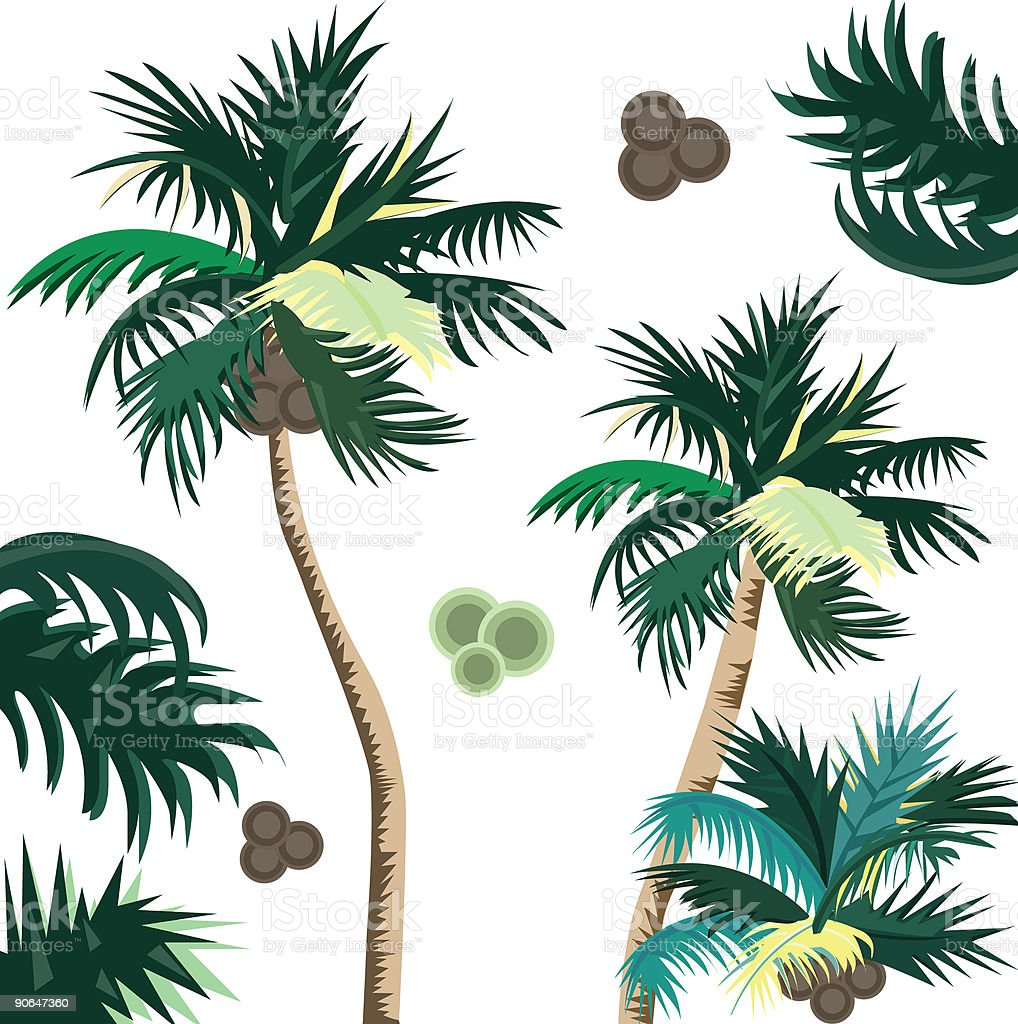 Hawaii Palm Trees Stock Vector Art & More Images of Coconut 90647360 ...