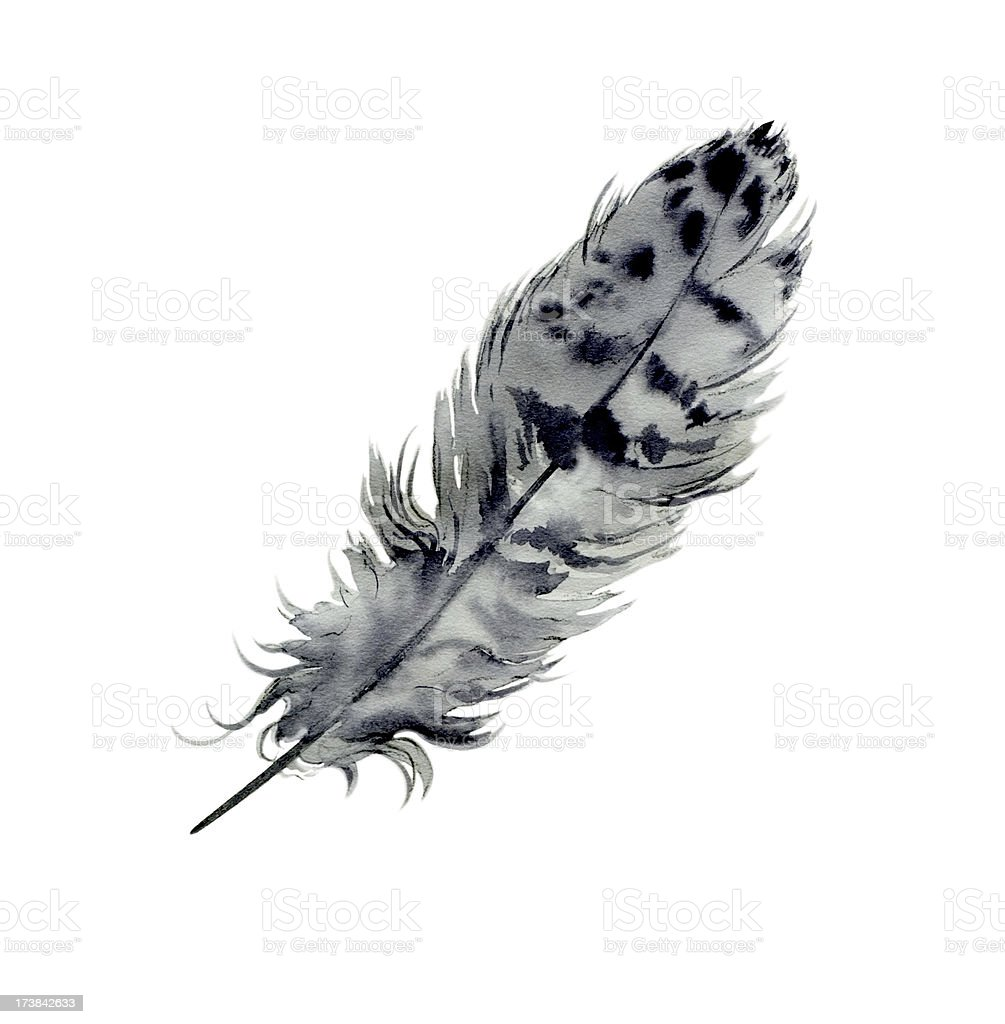 Hawk Feather vector art illustration