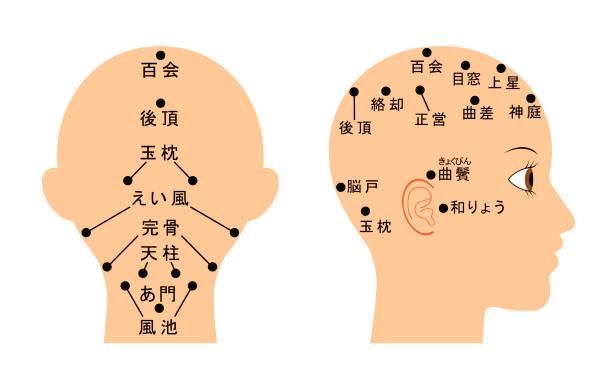 Head name vector art illustration