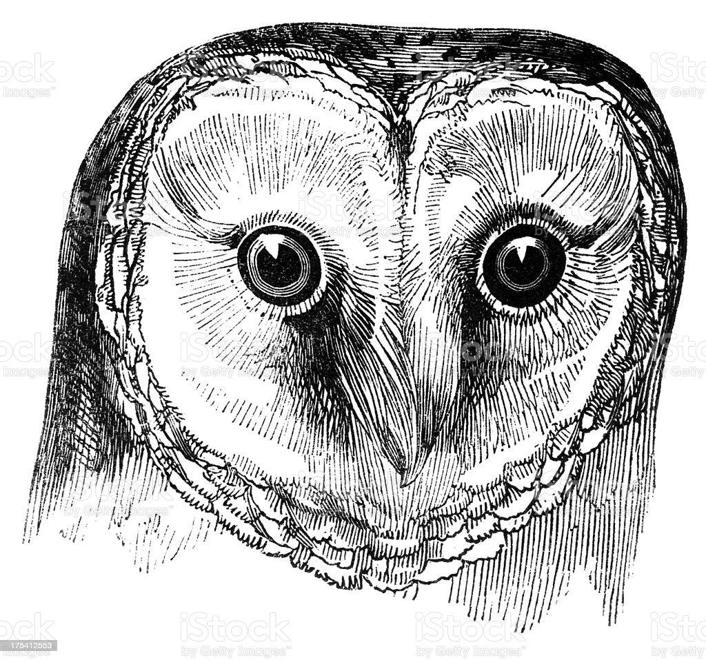 Head of Barn Owl向量藝術插圖