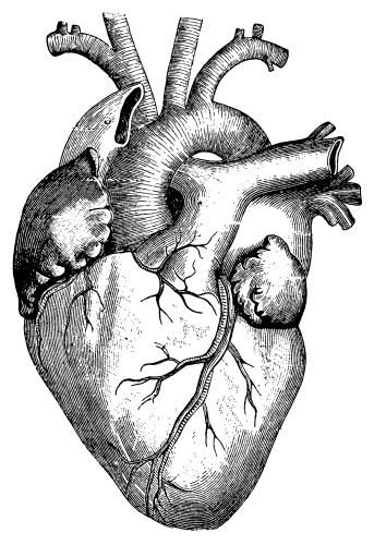 Antique engraving of human heart. Published in Systematischer Bilder-Atlas zum Conversations-Lexikon, Ikonographische Encyklopaedie der Wissenschaften und Kuenste (Brockhaus, Leipzig) in 1844. Photo by N.Staykov (2008)