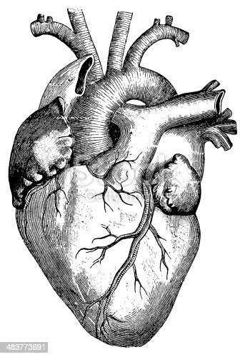 Heart stock vector art more images of 19th century - Dessin du coeur humain ...