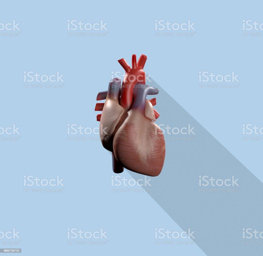 Herzinfografik Anatomische Symbol Des Herzens Auf Blaue Background3d ...